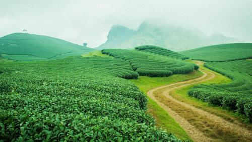 six-amazing-fields-in-northern-vietnam